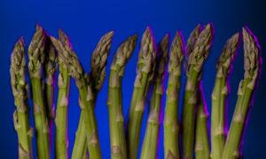 Gemüse Spargel