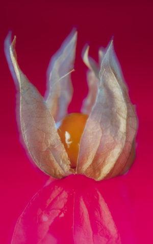Gemüse Paprika